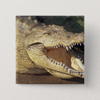 Africa, South Africa Nile crocodile Pinback Button