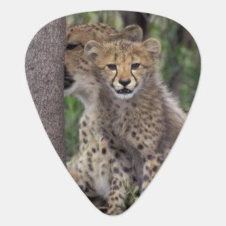 Africa, South Africa, Phinda Preserve. Cheetah Guitar Pick