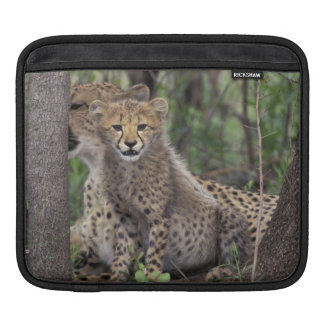 Africa, South Africa, Phinda Preserve. Cheetah iPad Sleeve