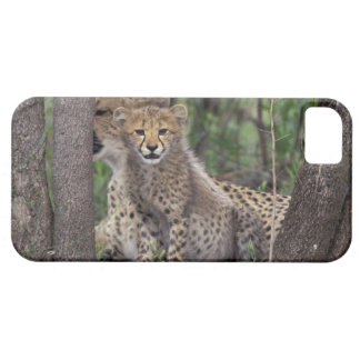 Africa, South Africa, Phinda Preserve. Cheetah iPhone SE/5/5s Case