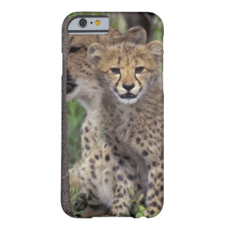 Africa, South Africa, Phinda Preserve. Cheetah iPhone 6 Case