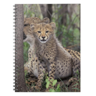 Africa, South Africa, Phinda Preserve. Cheetah Notebook