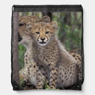 Africa, South Africa, Phinda Preserve. Cheetah Backpacks