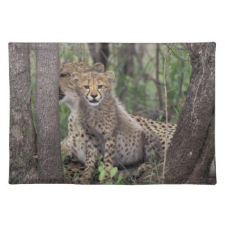 Africa, South Africa, Phinda Preserve. Cheetah Placemat