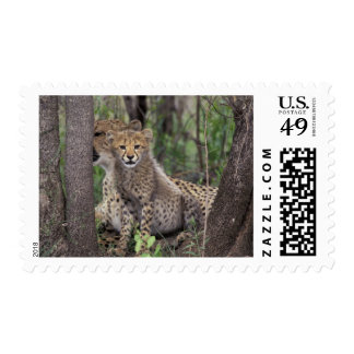 Africa South Africa Phinda Preserve Cheetah Stamp