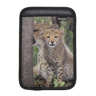 Africa, South Africa, Phinda Preserve. Cheetah Sleeve For iPad Mini