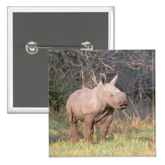 Africa, South Africa, Phinda Preserve. White Button