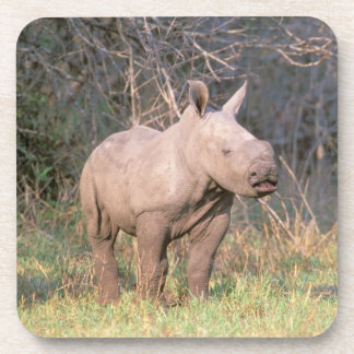 Africa, South Africa, Phinda Preserve. White Coaster