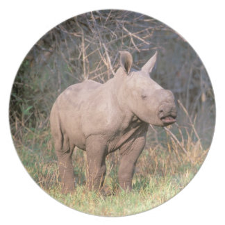 Africa, South Africa, Phinda Preserve. White Dinner Plate