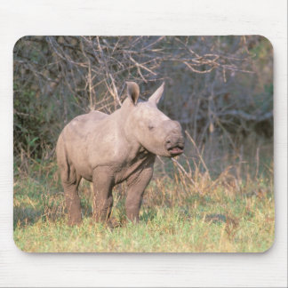 Africa, South Africa, Phinda Preserve. White Mouse Pad