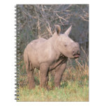 Africa, South Africa, Phinda Preserve. White Spiral Notebook