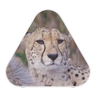 Africa, South Africa, Tswalu Reserve. Cheetahs Bluetooth Speaker