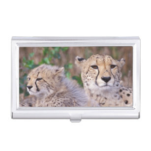 Jaguar business card holders cases zazzle africa south africa tswalu reserve cheetahs business card holder reheart Choice Image