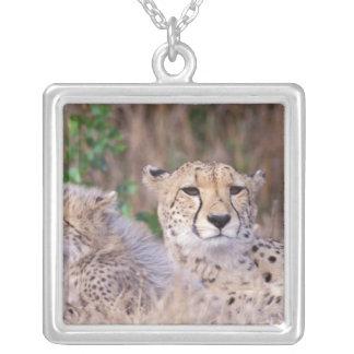 Africa, South Africa, Tswalu Reserve. Cheetahs Custom Jewelry