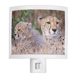 Africa, South Africa, Tswalu Reserve. Cheetahs Night Light
