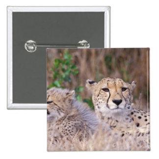 Africa, South Africa, Tswalu Reserve. Cheetahs Pinback Button