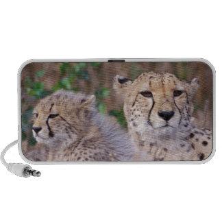Africa, South Africa, Tswalu Reserve. Cheetahs iPod Speaker
