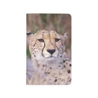 África, Suráfrica, reserva de Tswalu. Guepardos Cuaderno Grapado