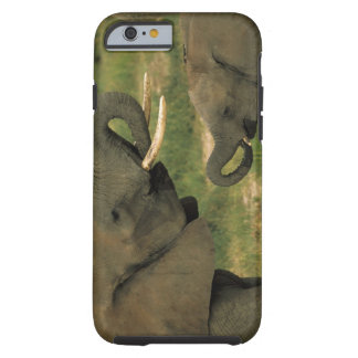 Africa, Tanzania. African elephant, loxodonta Tough iPhone 6 Case