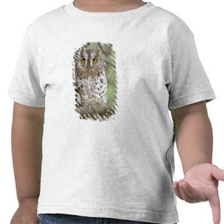 Africa. Tanzania. African Scops Owl at Tarangire 2 Tshirts