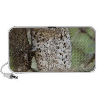 Africa. Tanzania. African Scops Owl at Tarangire Mini Speakers