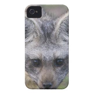 Africa. Tanzania. Bat-Eared Fox at Ndutu in the iPhone 4 Case-Mate Case