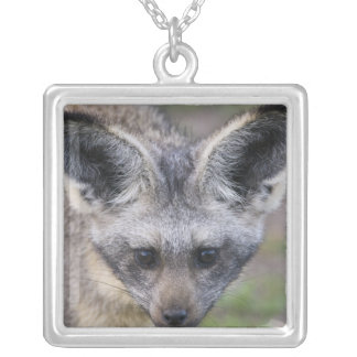 Africa. Tanzania. Bat-Eared Fox at Ndutu in the Square Pendant Necklace
