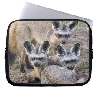 Africa. Tanzania. Bat-Eared Foxes at Ndutu in Laptop Sleeves