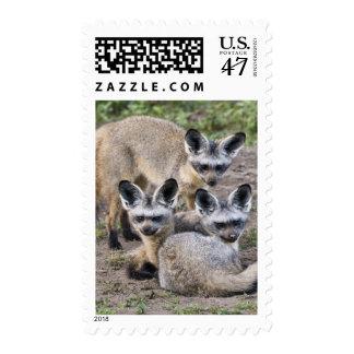 Africa. Tanzania. Bat-Eared Foxes at Ndutu in Stamp