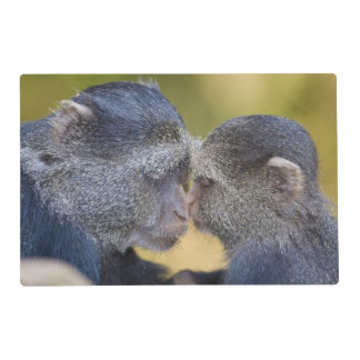 Africa. Tanzania. Blue Monkey mother with young Placemat