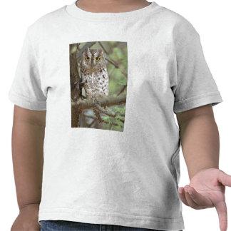 África. Tanzania. Búho de Scops del africano en Ta Camiseta