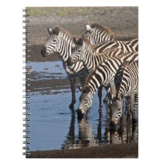 África. Tanzania. Cebras que beben en Ndutu adentr Note Book