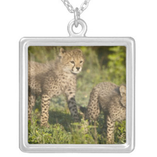 Africa. Tanzania. Cheetah cubs at Ndutu in the Square Pendant Necklace