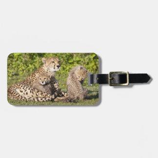 Africa. Tanzania. Cheetah mother and cubs 2 Bag Tag
