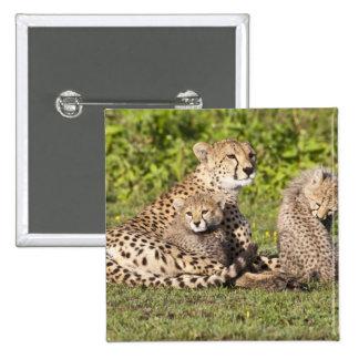 Africa. Tanzania. Cheetah mother and cubs 2 Pinback Buttons