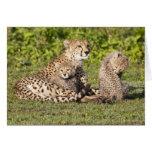Africa. Tanzania. Cheetah mother and cubs 2 Greeting Card