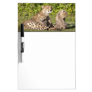 Africa. Tanzania. Cheetah mother and cubs 2 Dry-Erase Board