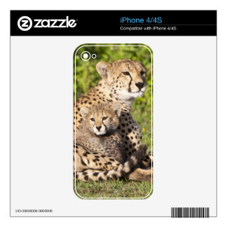 Africa. Tanzania. Cheetah mother and cubs 2 iPhone 4 Skin