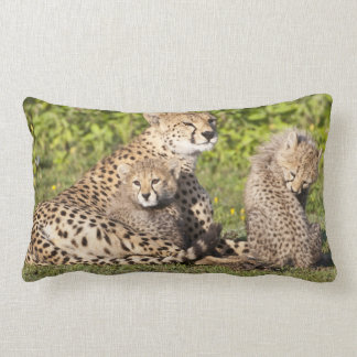 Africa. Tanzania. Cheetah mother and cubs 2 Lumbar Pillow