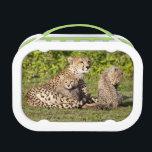 "Africa. Tanzania. Cheetah mother and cubs 2 Lunch Box<br><div class=""desc"">COPYRIGHT Ralph H. Bendjebar / DanitaDelimont.com   AF45 RBE0336.jpg   Africa. Tanzania. Cheetah mother and cubs playing at Ndutu in the Ngorongoro Conservation Area.</div>"