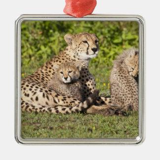 Africa. Tanzania. Cheetah mother and cubs 2 Metal Ornament
