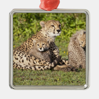 Africa. Tanzania. Cheetah mother and cubs 2 Square Metal Christmas Ornament