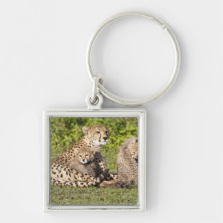 Africa. Tanzania. Cheetah mother and cubs 2 Silver-Colored Square Keychain
