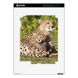 Africa. Tanzania. Cheetah mother and cubs 2 Skin For iPad 3
