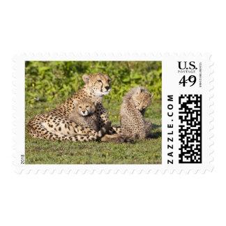 Africa. Tanzania. Cheetah mother and cubs 2 Stamp