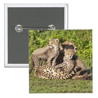 Africa. Tanzania. Cheetah mother and cubs Buttons