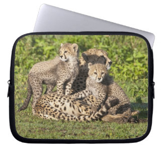 Africa. Tanzania. Cheetah mother and cubs Computer Sleeves
