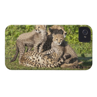 Africa. Tanzania. Cheetah mother and cubs iPhone 4 Case-Mate Case