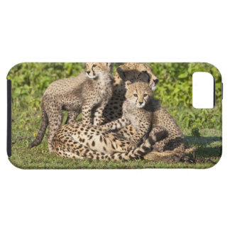 Africa. Tanzania. Cheetah mother and cubs iPhone SE/5/5s Case