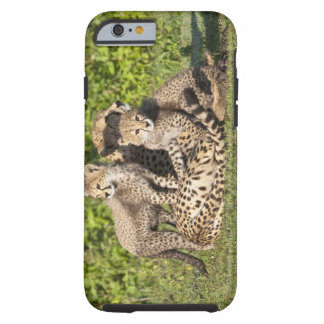 Africa. Tanzania. Cheetah mother and cubs iPhone 6 Case
